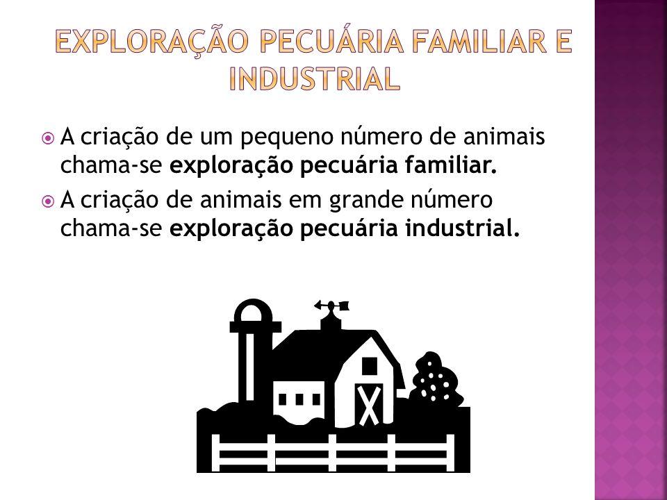 Exploração pecuária familiar e industrial