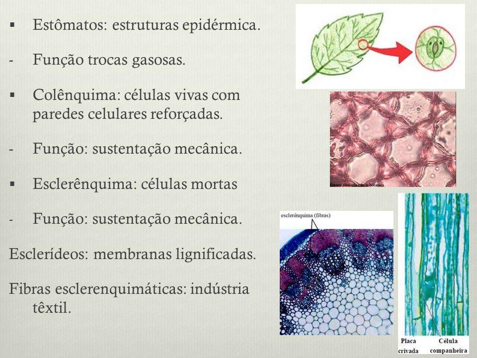 Estômatos: estruturas epidérmica.