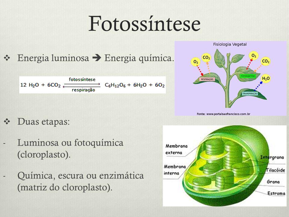 Fotossíntese Energia luminosa  Energia química. Duas etapas: