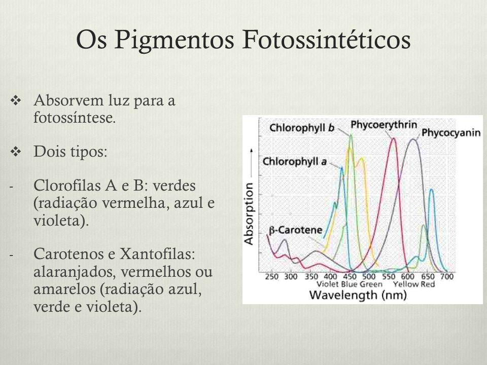 Os Pigmentos Fotossintéticos
