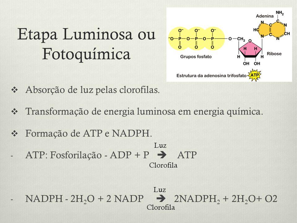 Etapa Luminosa ou Fotoquímica