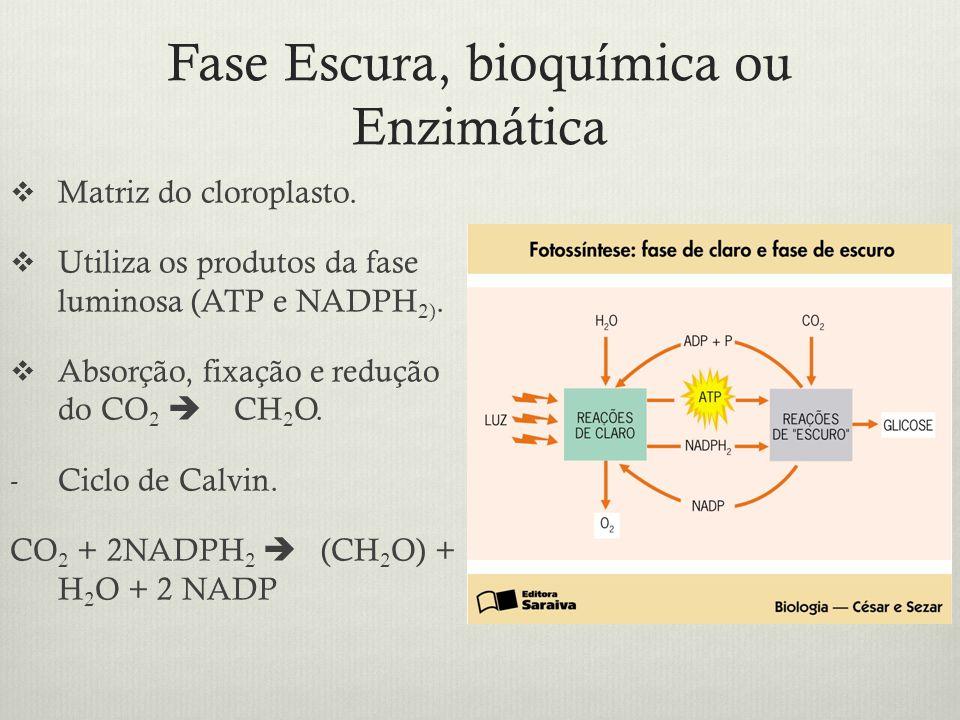 Fase Escura, bioquímica ou Enzimática