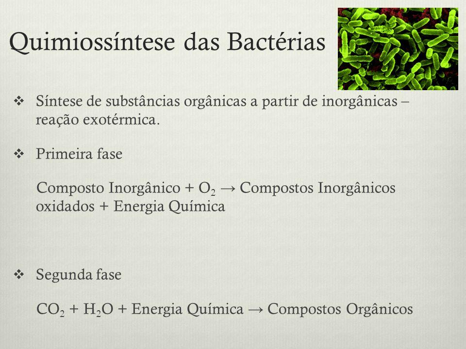Quimiossíntese das Bactérias