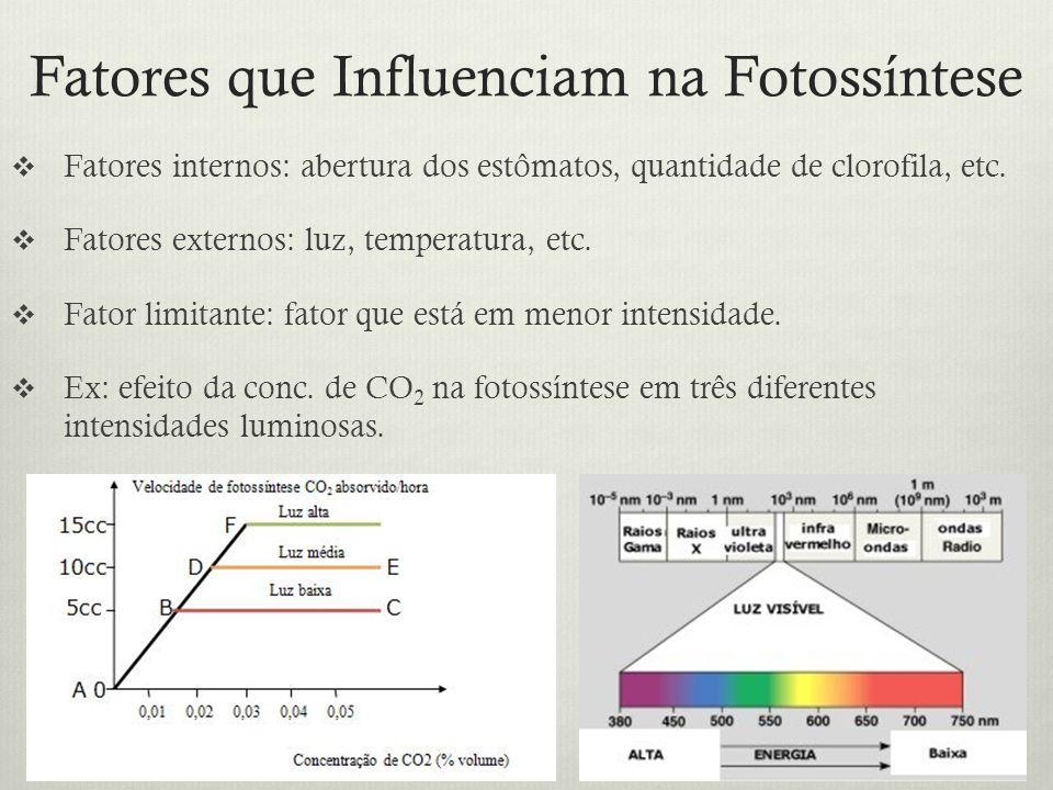 Fatores que Influenciam na Fotossíntese