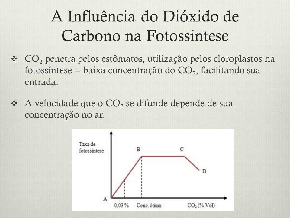 A Influência do Dióxido de Carbono na Fotossíntese