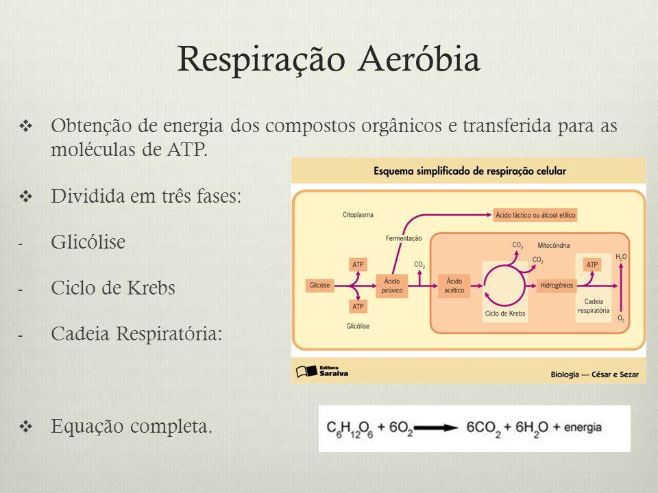 Respiração Aeróbia Obtenção de energia dos compostos orgânicos e transferida para as moléculas de ATP.