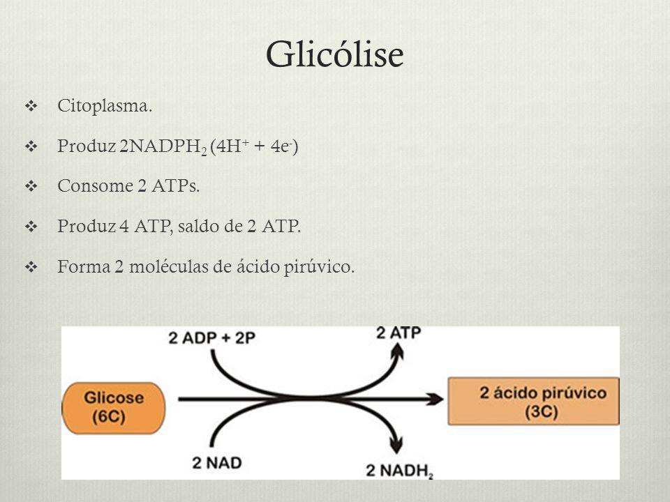 Glicólise Citoplasma. Produz 2NADPH2 (4H+ + 4e-) Consome 2 ATPs.