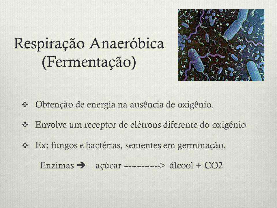 Respiração Anaeróbica (Fermentação)