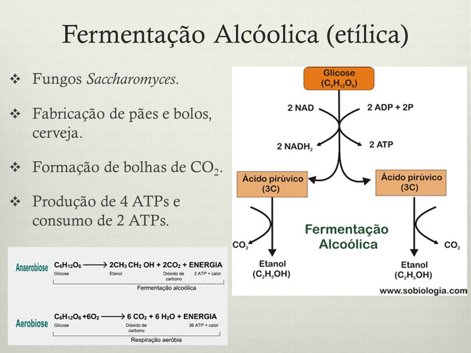 Fermentação Alcóolica (etílica)