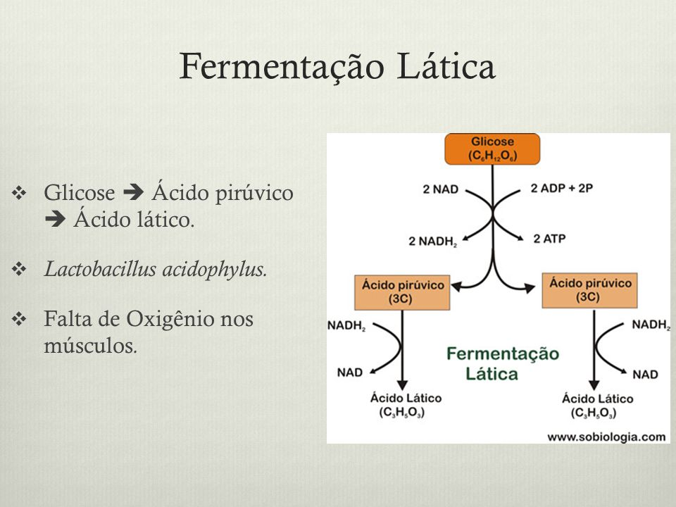 Fermentação Lática Glicose  Ácido pirúvico  Ácido lático.