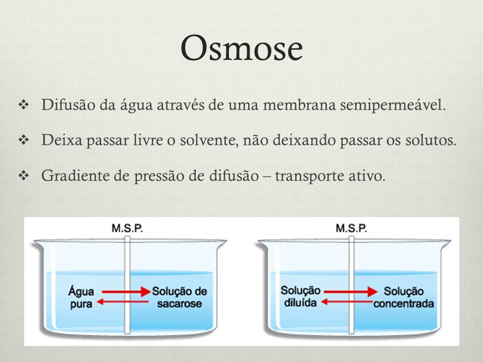 Osmose Difusão da água através de uma membrana semipermeável.