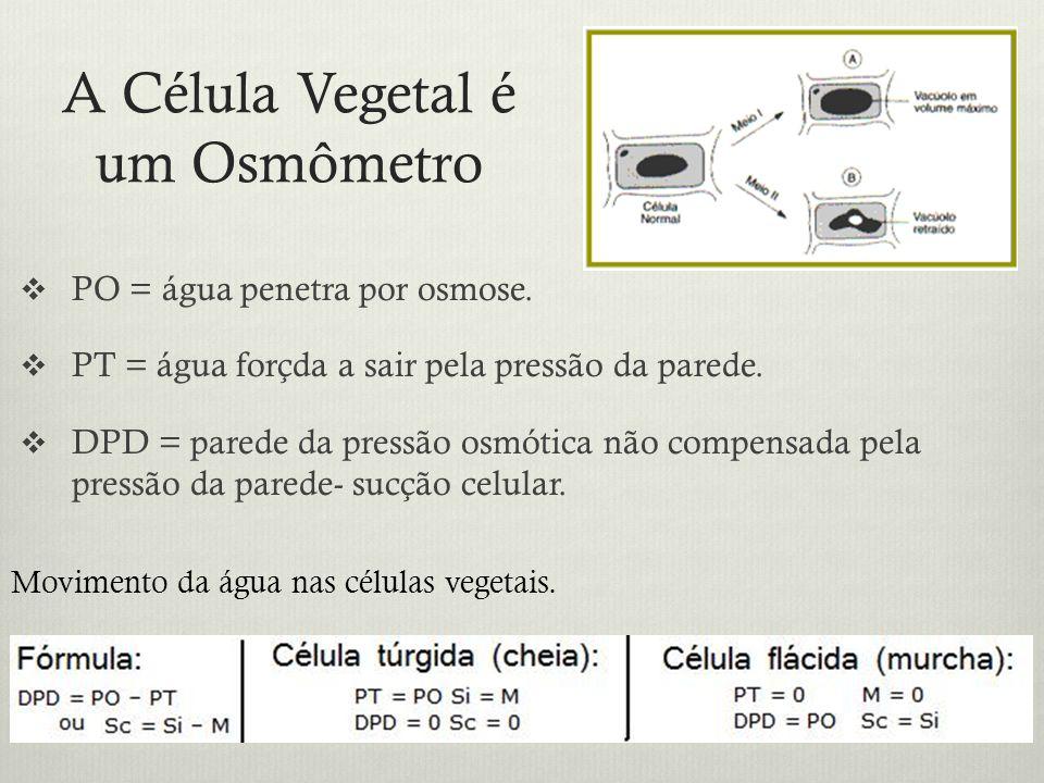 A Célula Vegetal é um Osmômetro