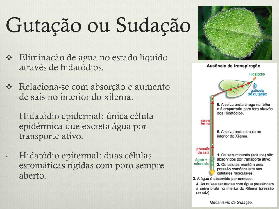Gutação ou Sudação Eliminação de água no estado líquido através de hidatódios. Relaciona-se com absorção e aumento de sais no interior do xilema.