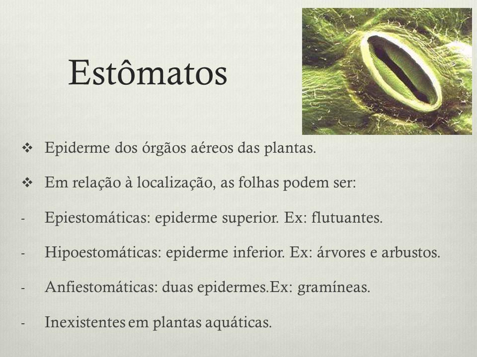 Estômatos Epiderme dos órgãos aéreos das plantas.
