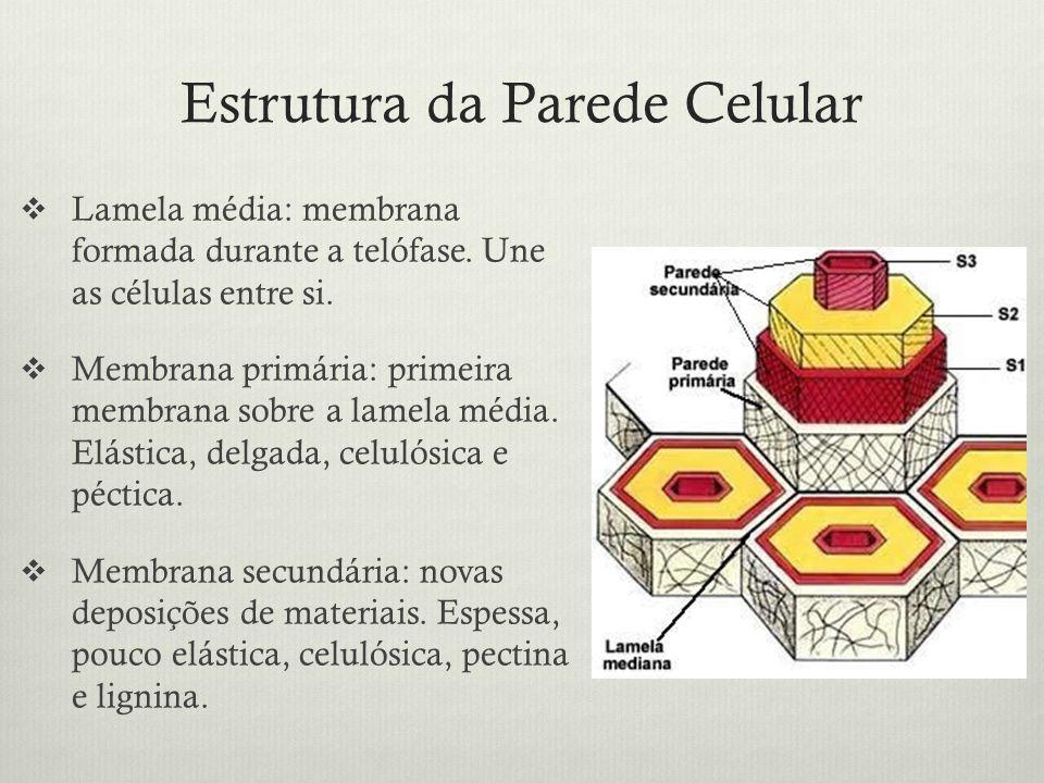 Estrutura da Parede Celular