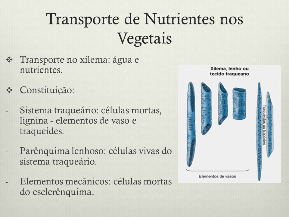 Transporte de Nutrientes nos Vegetais