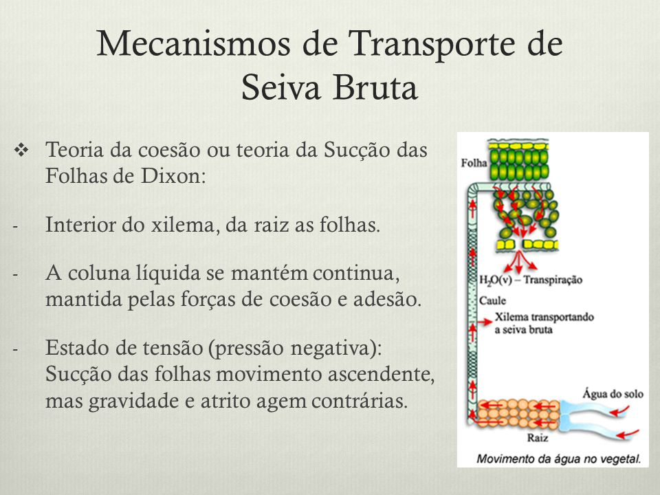 Mecanismos de Transporte de Seiva Bruta