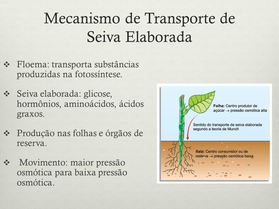 Mecanismo de Transporte de Seiva Elaborada