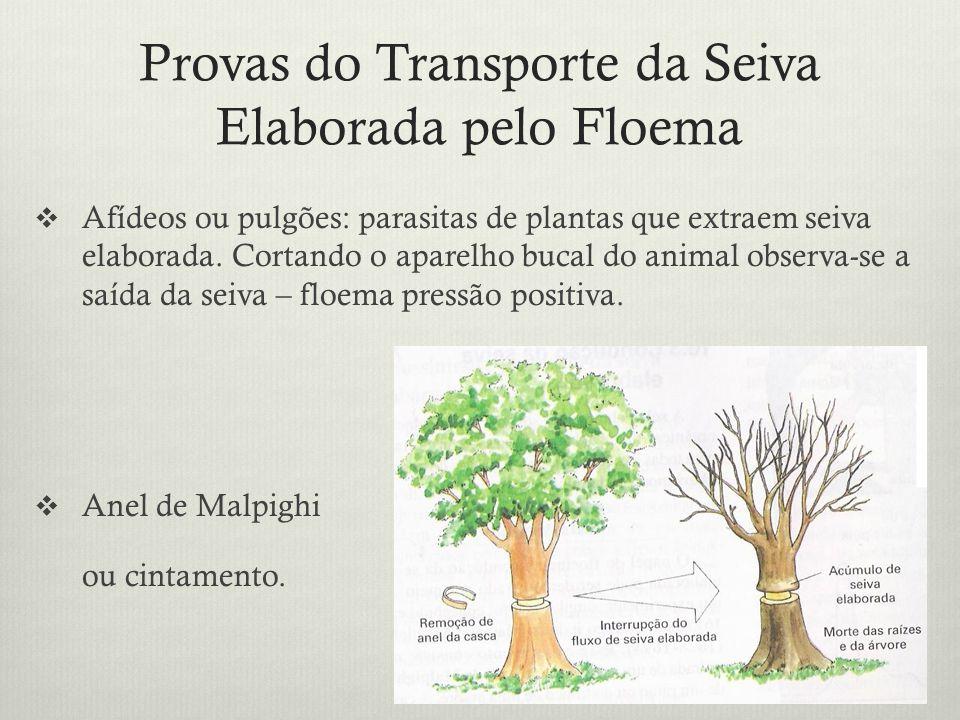 Provas do Transporte da Seiva Elaborada pelo Floema