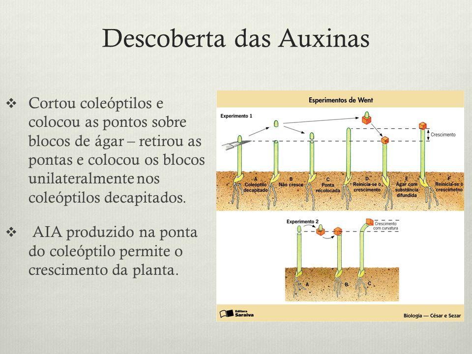Descoberta das Auxinas