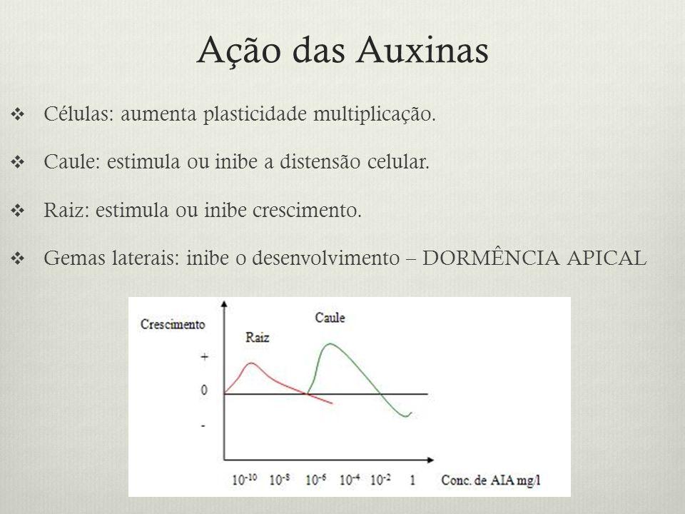 Ação das Auxinas Células: aumenta plasticidade multiplicação.
