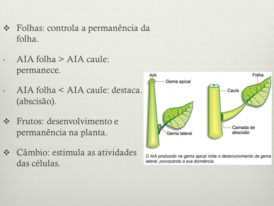 Folhas: controla a permanência da folha.