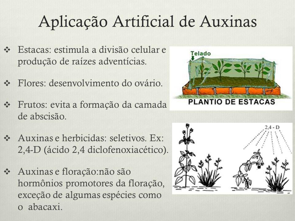 Aplicação Artificial de Auxinas