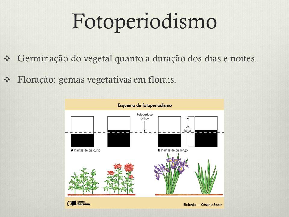 Fotoperiodismo Germinação do vegetal quanto a duração dos dias e noites.