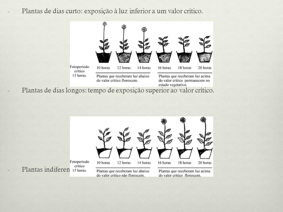 Plantas de dias curto: exposição à luz inferior a um valor crítico.