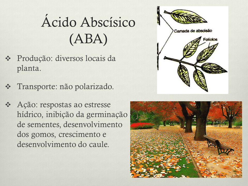 Ácido Abscísico (ABA) Produção: diversos locais da planta.