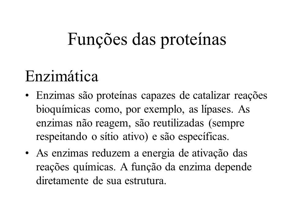 Funções das proteínas Enzimática