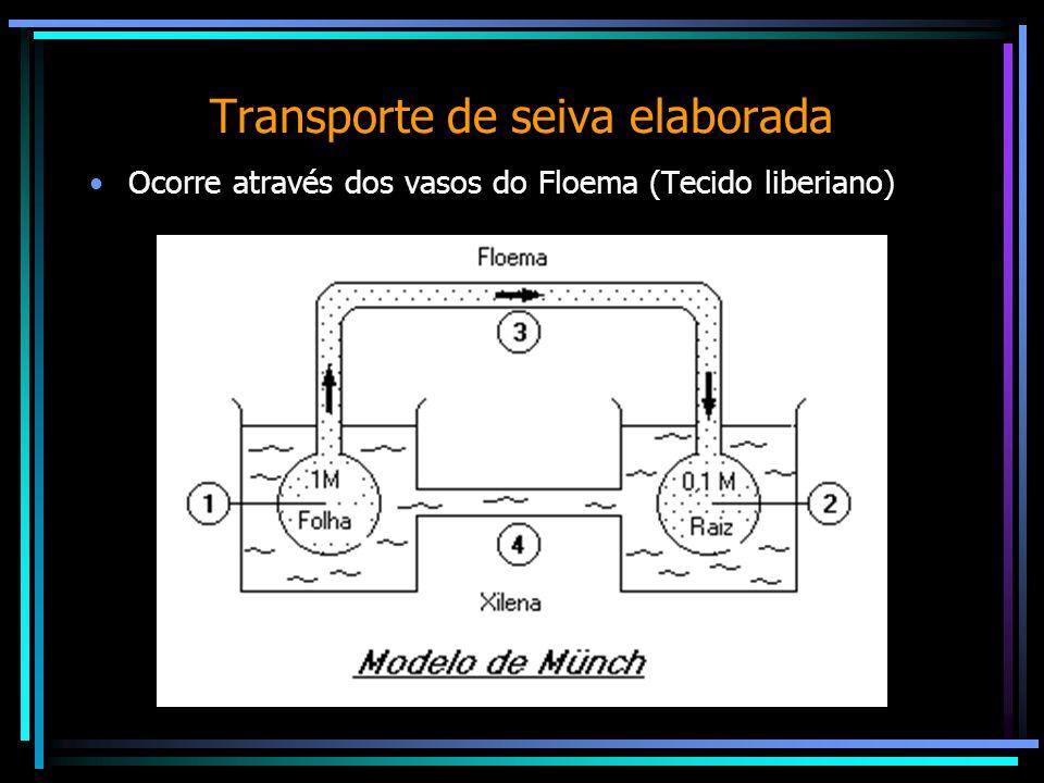 Transporte de seiva elaborada