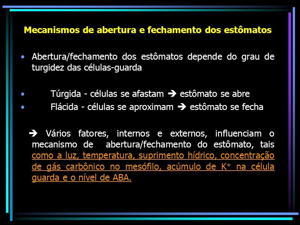 Mecanismos de abertura e fechamento dos estômatos