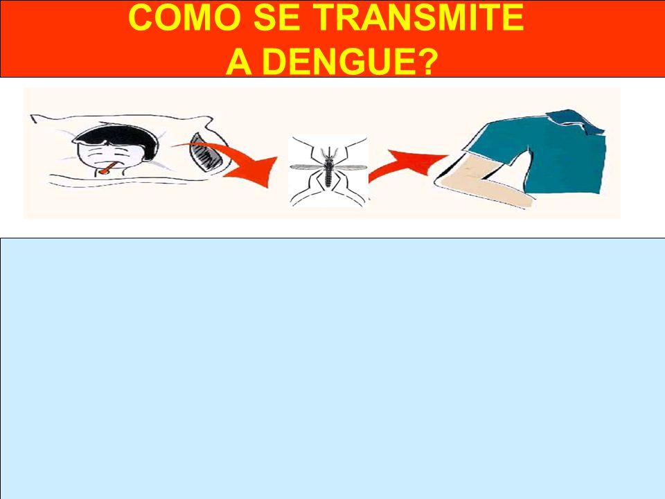 COMO SE TRANSMITE A DENGUE