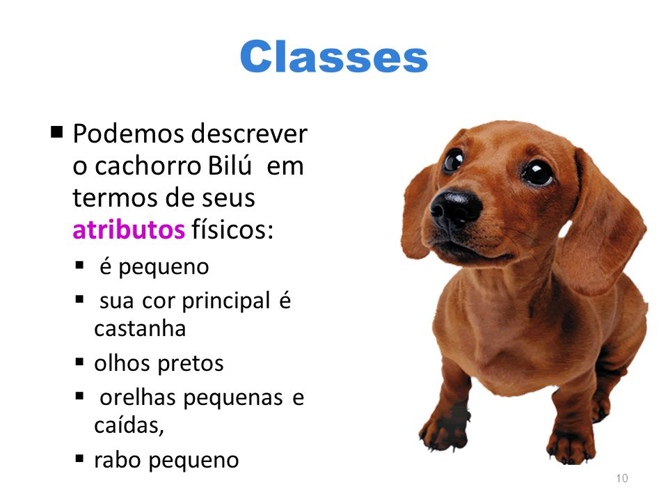 Classes Podemos descrever o cachorro Bilú em termos de seus atributos físicos: é pequeno. sua cor principal é castanha.