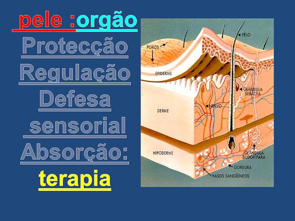 pele :orgão Protecção Regulação Defesa sensorial Absorção: terapia