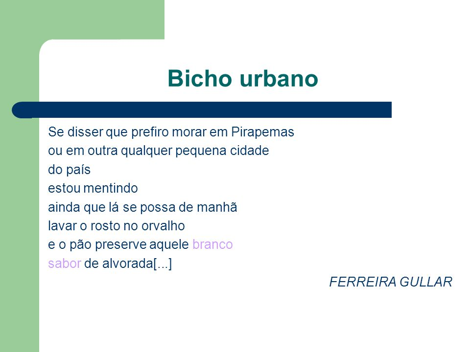 Bicho urbano Se disser que prefiro morar em Pirapemas