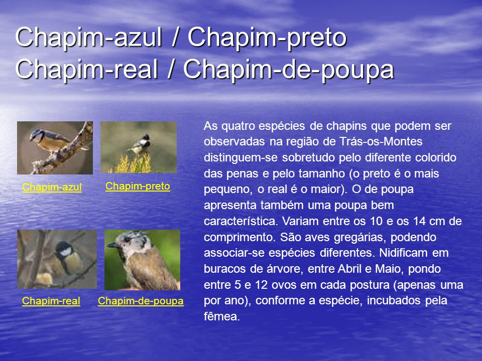 Chapim-azul / Chapim-preto Chapim-real / Chapim-de-poupa