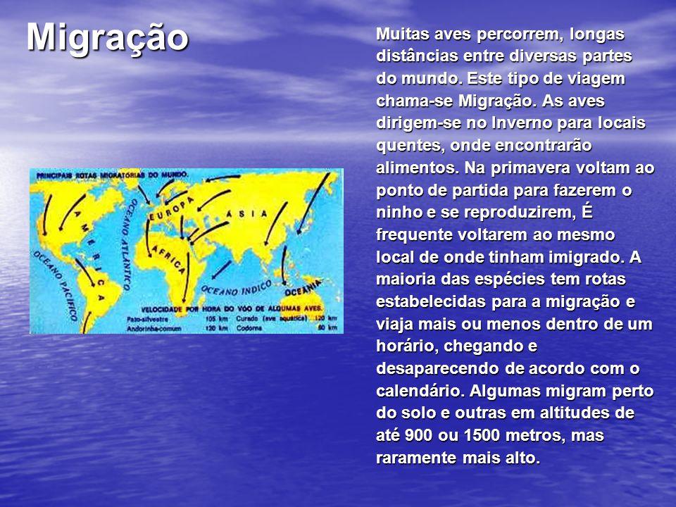 Migração