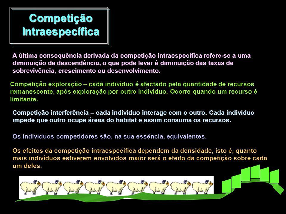Competição Intraespecífica