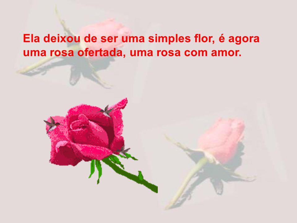 Ela deixou de ser uma simples flor, é agora uma rosa ofertada, uma rosa com amor.