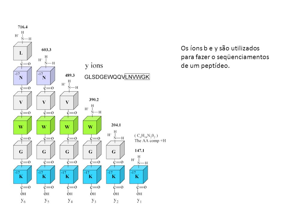 Os íons b e y são utilizados para fazer o seqüenciamentos de um peptídeo.