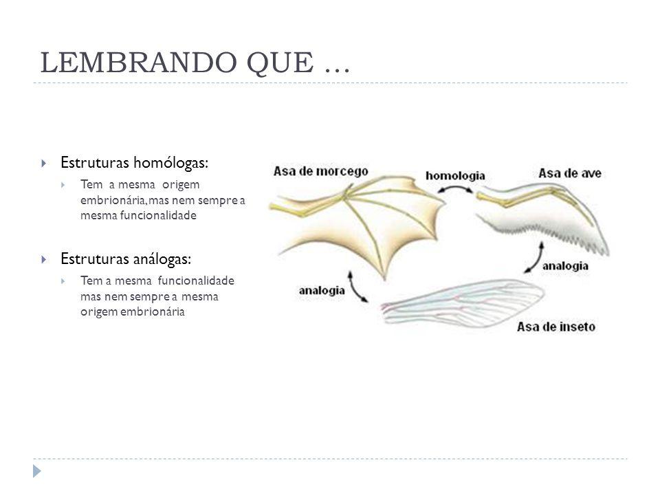 LEMBRANDO QUE ... Estruturas homólogas: Estruturas análogas: