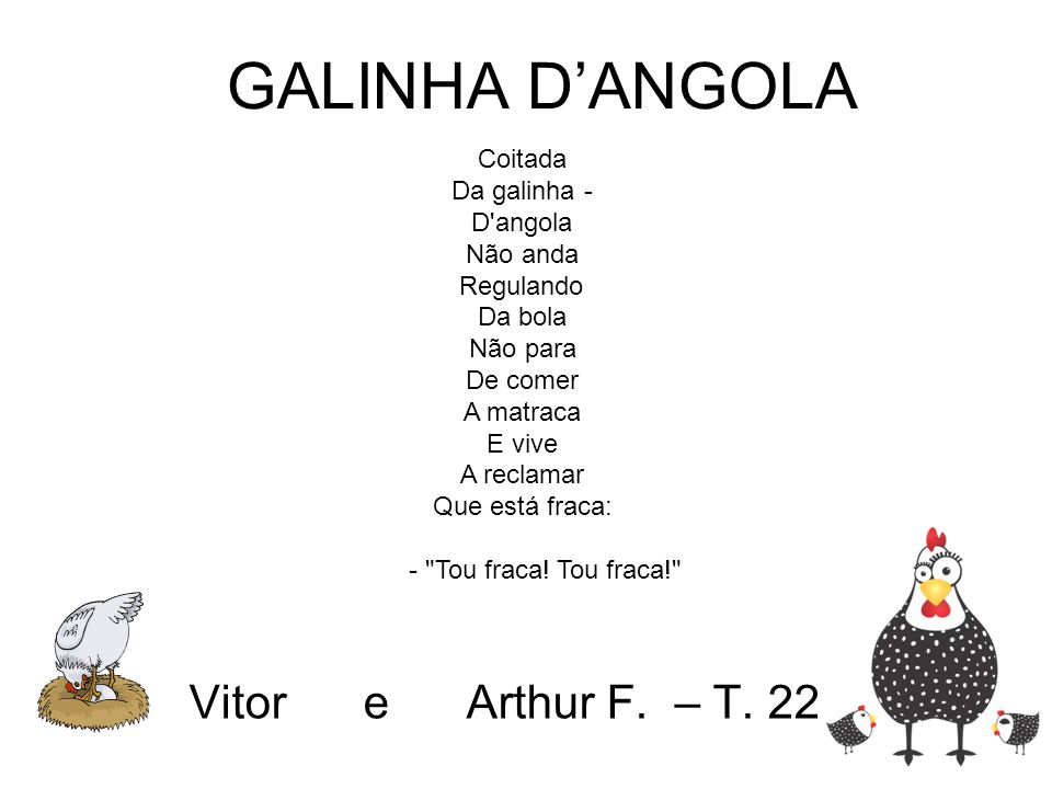 GALINHA D'ANGOLA Vitor e Arthur F. – T. 22