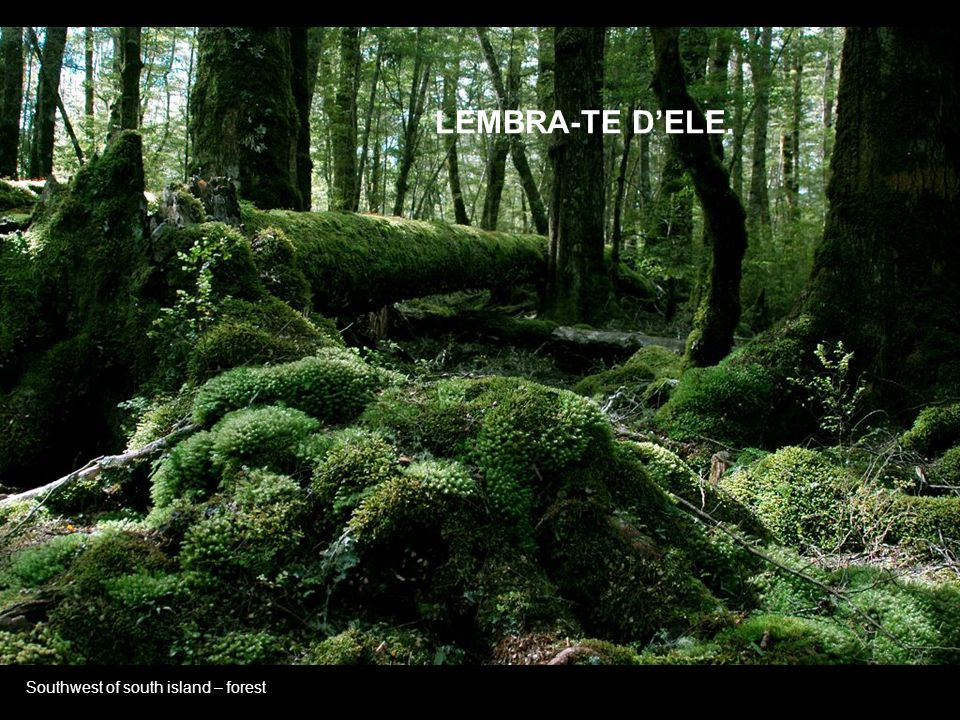 LEMBRA-TE D'ELE. Southwest of south island – forest