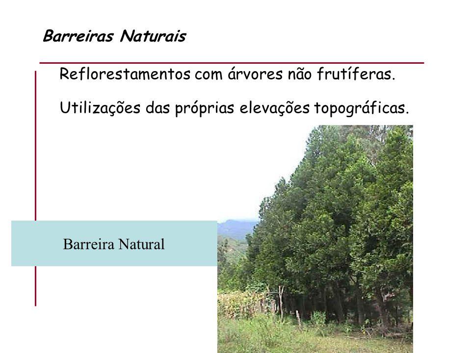 Barreiras Naturais Reflorestamentos com árvores não frutíferas. Utilizações das próprias elevações topográficas.
