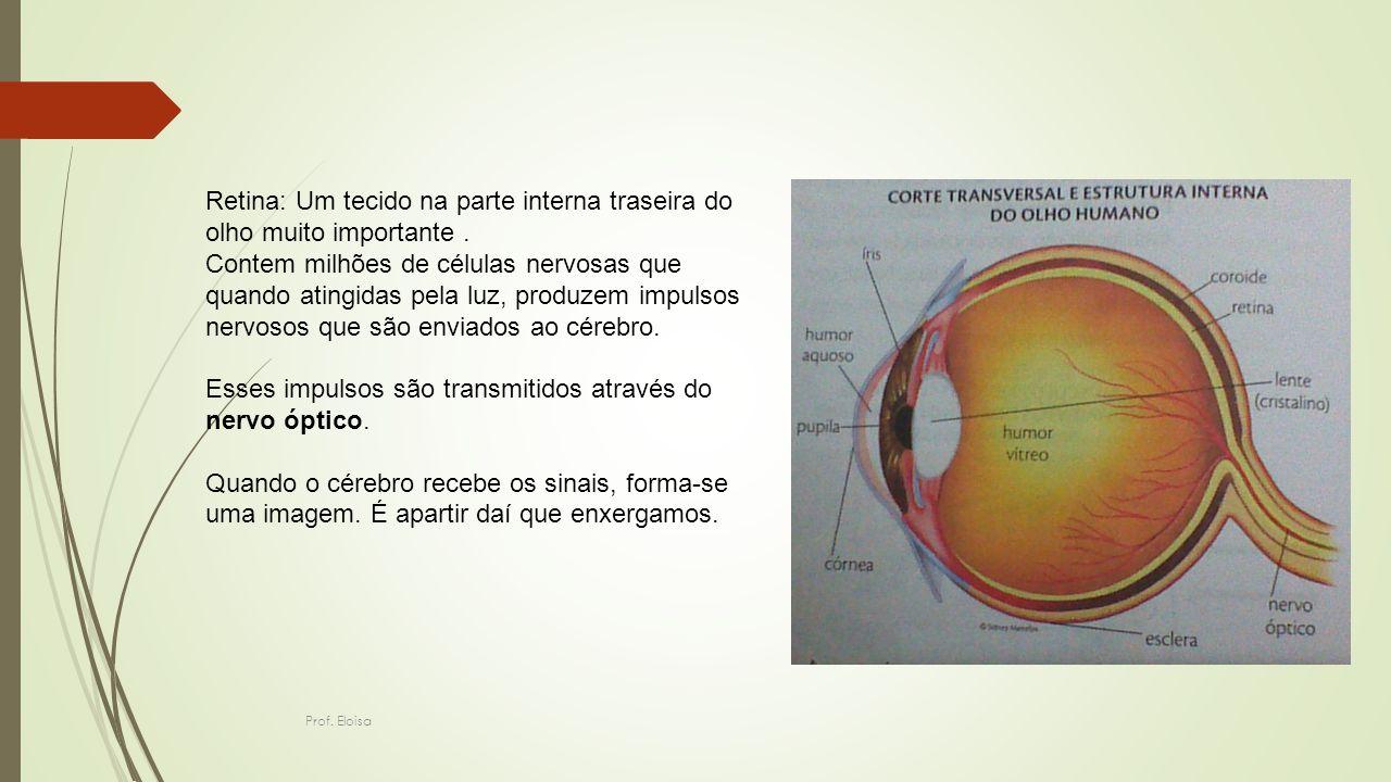 Retina: Um tecido na parte interna traseira do olho muito importante .