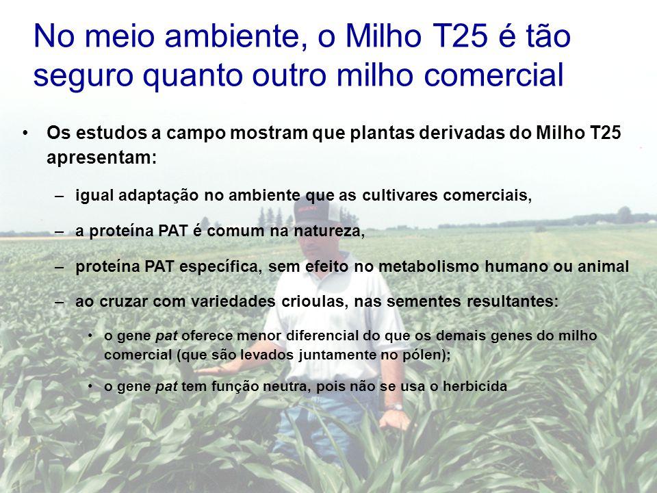 No meio ambiente, o Milho T25 é tão seguro quanto outro milho comercial