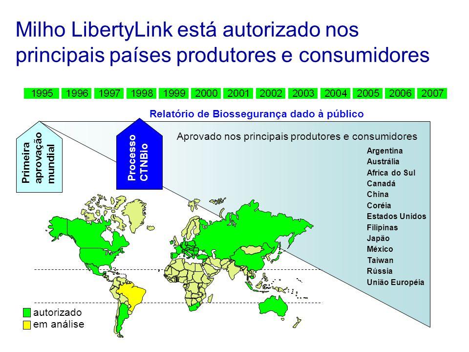 Milho LibertyLink está autorizado nos principais países produtores e consumidores