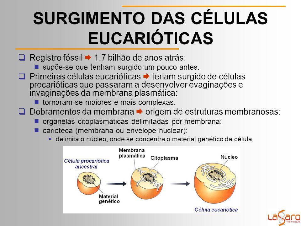 SURGIMENTO DAS CÉLULAS EUCARIÓTICAS